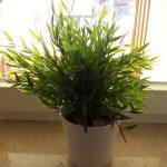 Grüne Topfpflanze am Fenster
